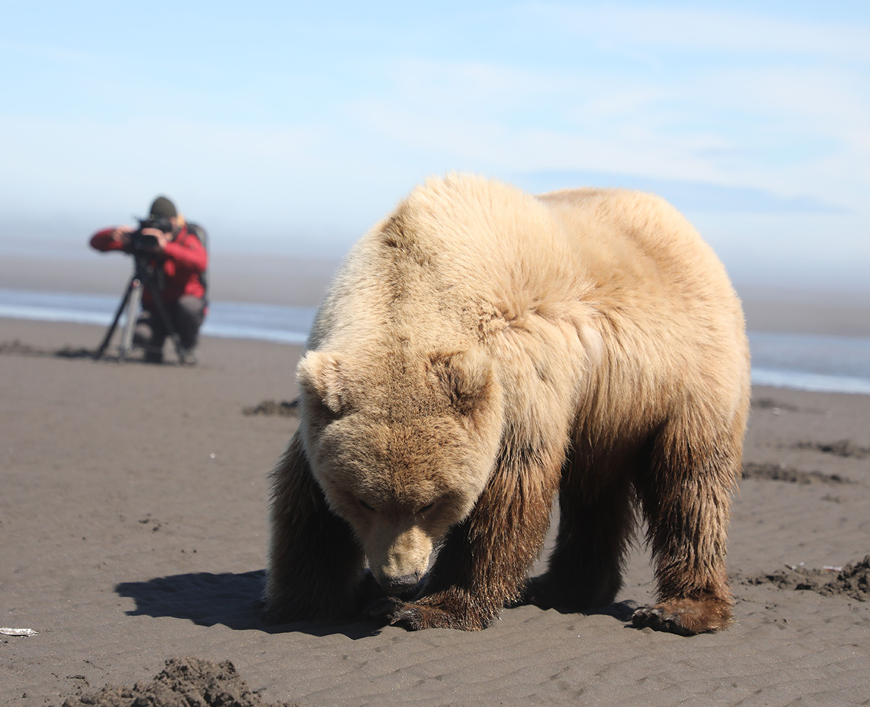PM 155-2019 Auf Muschelsuche bei Ebbe, Lake Clark Nationalpark, Alaska 2018 © Lea Goldberg