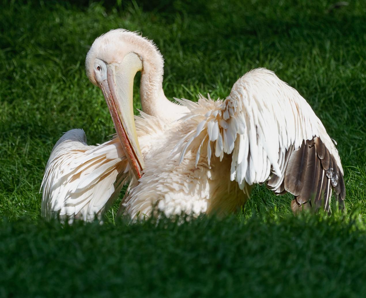 Tierpark Gotha ©Bernd Seydel